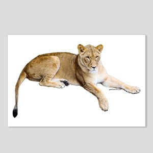 Resting lioness Postcards (Package of 8)