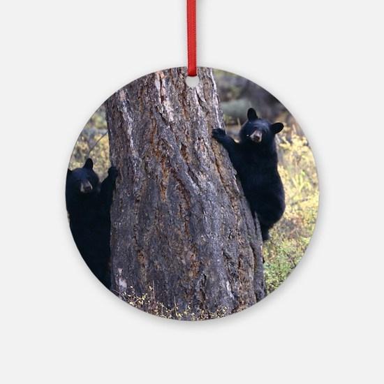 black bear cubs Round Ornament