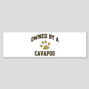 Cavapoo: Owned Bumper Sticker