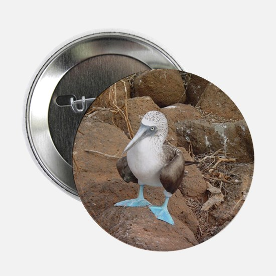 """Blue-footed Booby 2.25"""" Button"""