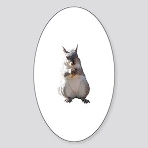 Squirrel With Nut Nature Photo Oval Sticker