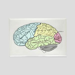 dr brain lrg Magnets