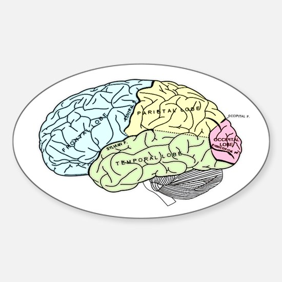 dr brain lrg Decal