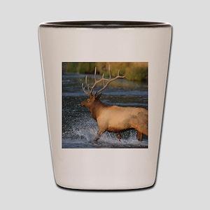 elk splashing in the water Shot Glass