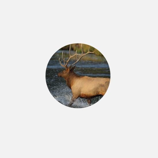 elk splashing in the water Mini Button