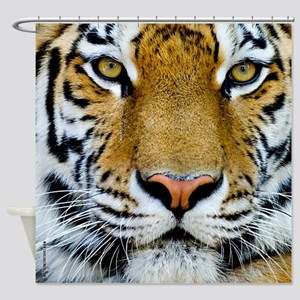 Tigers, Big Cat Football Shower Curtain