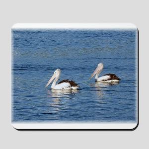 Australian Pelicans Mousepad