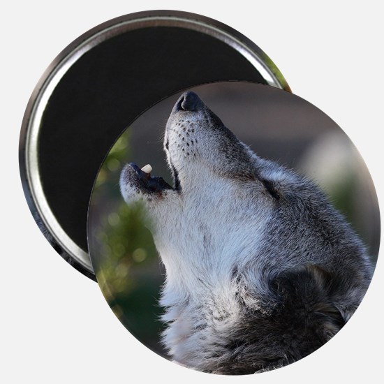 wolf howling Magnet
