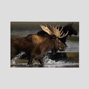 moose splashing in the water Rectangle Magnet