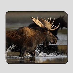 moose splashing in the water Mousepad