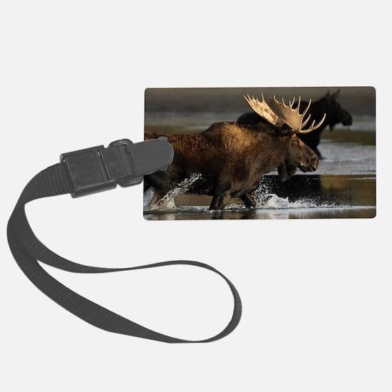 moose splashing in the water Luggage Tag