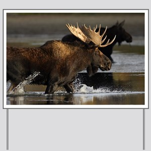 moose splashing in the water Yard Sign