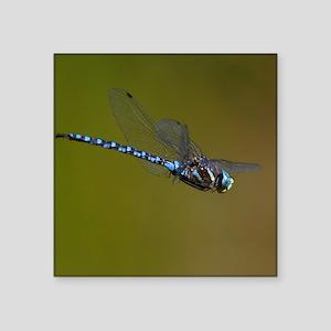 "dragonfly in flight Square Sticker 3"" x 3"""