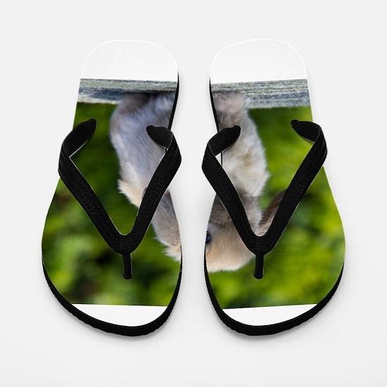 Unique Bunny Flip Flops