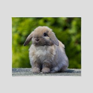 d1faf02ed5d Tort Holland Lop Rabbit Toys Gifts - CafePress