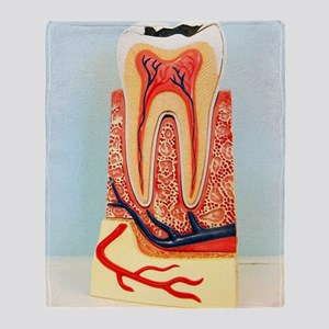 Tooth anatomy Throw Blanket