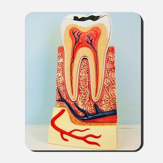 Tooth anatomy Mousepad