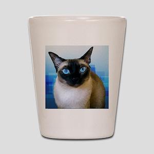 Siamese Blue Shot Glass