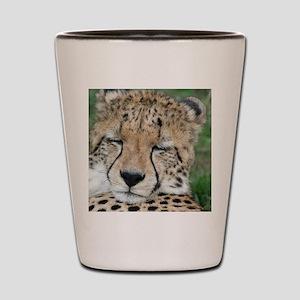 cheetah 005 Shot Glass