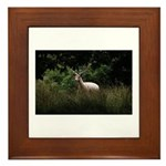 White Stag Framed Tile