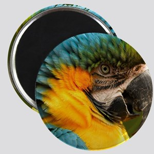 macaw, yellow and gold Magnet