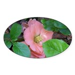 Camellia Japonica Sticker (Oval)