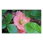 Camellia Japonica Sticker (Rectangle)