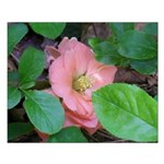 Camellia Japonica Small Poster