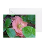 Camellia Japonica Greeting Cards (Pk of 10)
