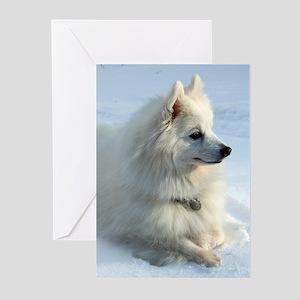 Arctic Fox Greeting Cards (Pk of 10)