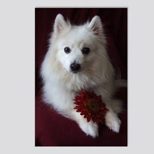 Crimson Flower Postcards (Package of 8)