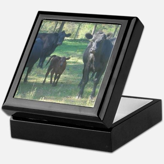 black angus Keepsake Box