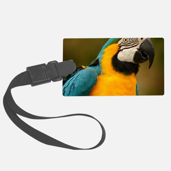 blue and gold macaw Luggage Tag