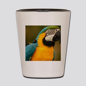 blue and gold macaw Shot Glass