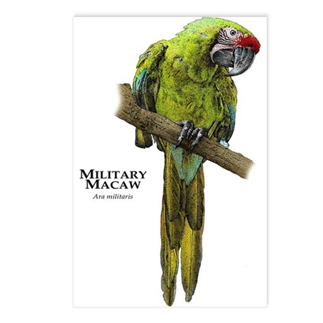 Military Macaw Postcards (Package of 8)