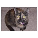 Tort Calico Large Poster