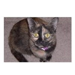 Tort Calico Postcards (Package of 8)