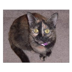Tort Calico Posters