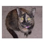 Tort Calico Small Poster