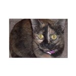 Tort Calico Rectangle Magnet (10 pack)