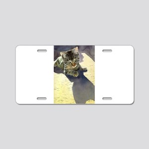 Feline Fascination Aluminum License Plate