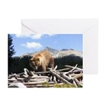 Grizzly Bear Greeting Cards (Pk of 10)