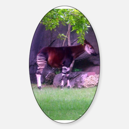 okapi 2 Oval Decal