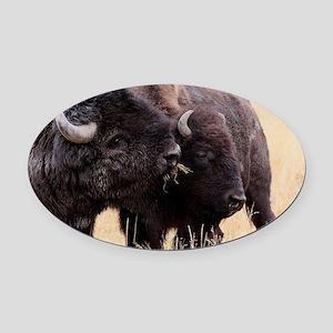 bison friendship Oval Car Magnet