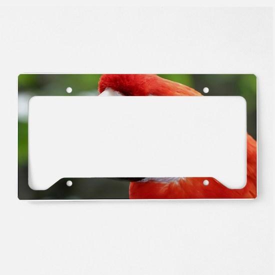 Scarlet Macaw License Plate Holder