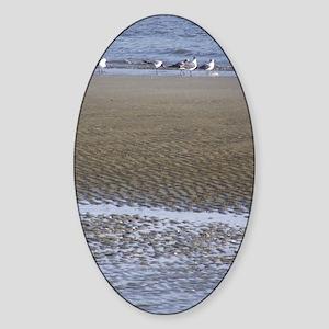 Sea Gulls in a Sound Sticker (Oval)