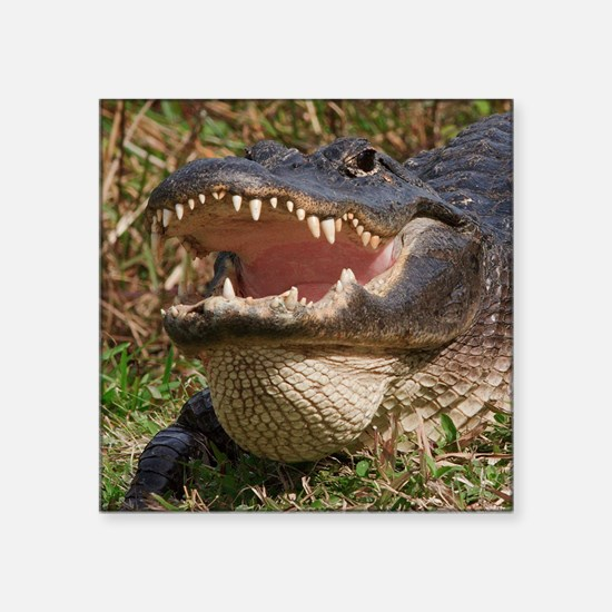 """alligator with teeth showin Square Sticker 3"""" x 3"""""""