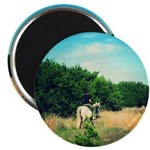 Trail Ride Magnets