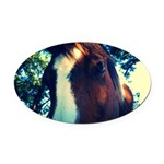 Lovey Pinto Mare Oval Car Magnet