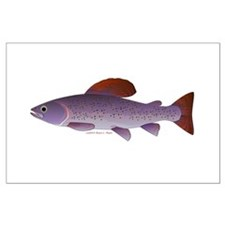 Arctic Grayling Posters